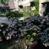 MEADE_GardenPlSum12_040.jpg